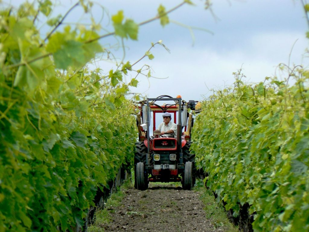 Vignes Haute-Saintonge