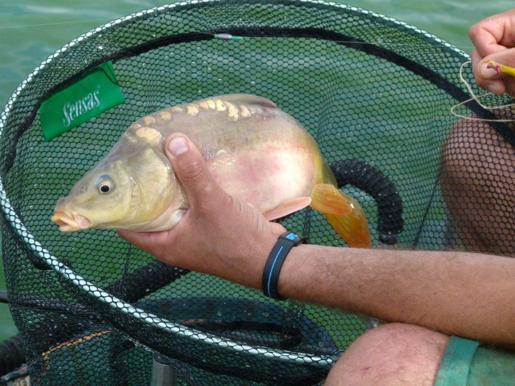 Pêche Haute-Saintonge